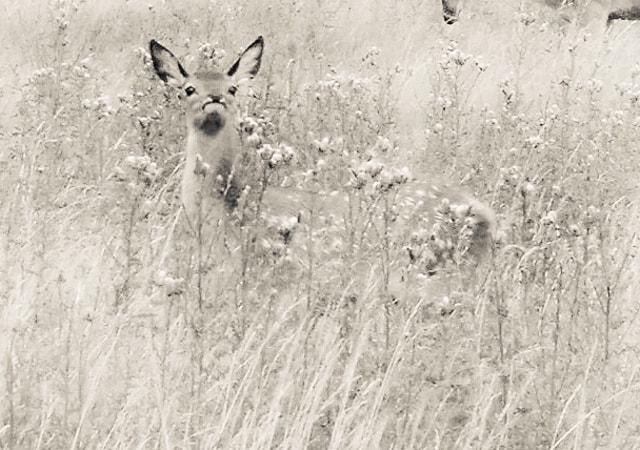 takakodrew.photographer--4