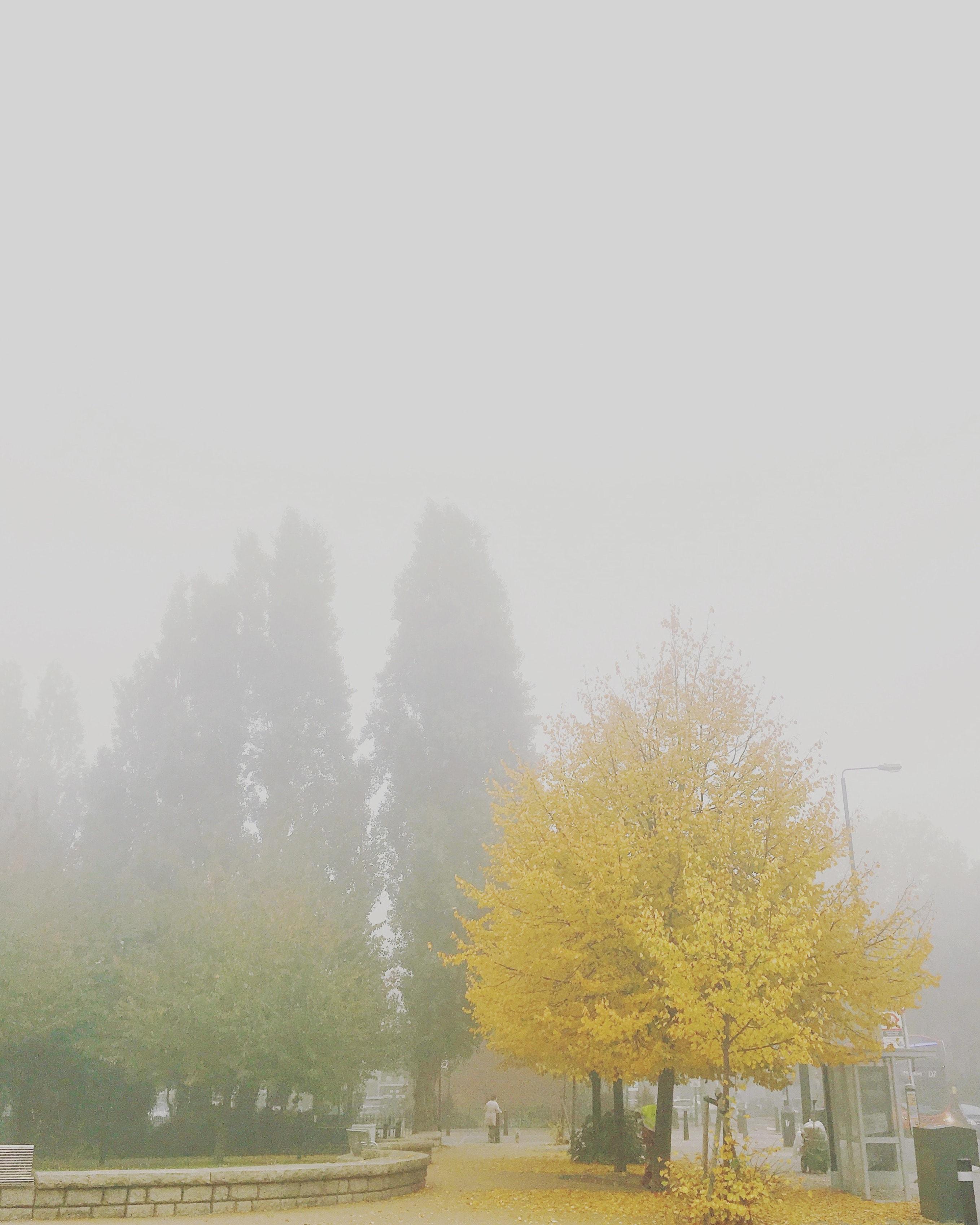 img_foggymorning
