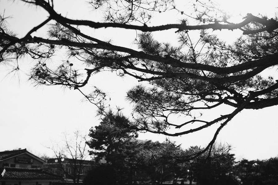 takakodrew.photographer-5274